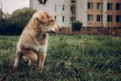 Aanbiddelijk bruin puppy met verbazende blauwe ogen op achtergrond van aut stock fotografie