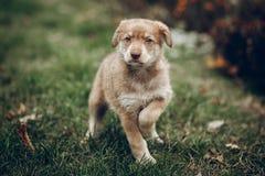 Aanbiddelijk bruin puppy met verbazende blauwe ogen op achtergrond van aut royalty-vrije stock foto's
