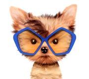 Aanbiddelijk die puppy met zonnebril, op wit wordt geïsoleerd Stock Afbeeldingen