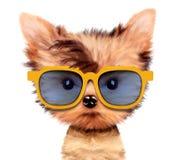 Aanbiddelijk die puppy met zonnebril, op wit wordt geïsoleerd Stock Foto's