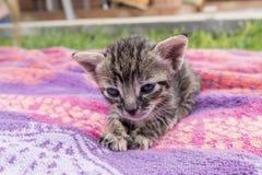 Aanbiddelijk en slaperig gestreepte katkatje royalty-vrije stock foto