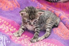 Aanbiddelijk en slaperig gestreepte katkatje royalty-vrije stock afbeeldingen