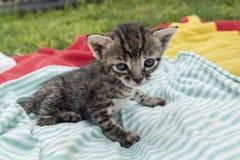 Aanbiddelijk en slaperig gestreepte katkatje royalty-vrije stock afbeelding