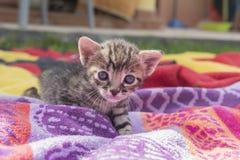 Aanbiddelijk en slaperig gestreepte katkatje stock afbeeldingen