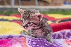 Aanbiddelijk en slaperig gestreepte katkatje stock afbeelding