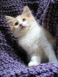 Aanbiddelijk katje Royalty-vrije Stock Afbeeldingen