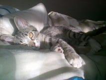 Aanbiddelijk katje Stock Afbeelding