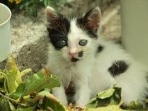 Aanbiddelijk katje Stock Foto