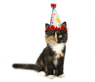 Aanbiddelijk Katje op een Witte Achtergrond met Verjaardagshoed Stock Afbeeldingen