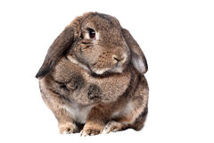 Aanbiddelijk konijn royalty-vrije stock foto