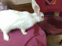 Aanbiddelijk konijntje royalty-vrije stock foto's