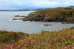 Aanbiddelijk natuurlijk wild landschap met rotsachtig klippenhoogtepunt van bloemen en gras stock foto
