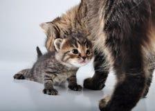 Aanbiddelijk pasgeboren katje met moeder royalty-vrije stock foto's