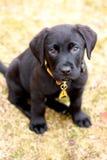 Aanbiddelijk puppy Royalty-vrije Stock Afbeeldingen