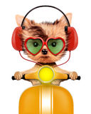 Aanbiddelijk puppy met hoofdtelefoons die op bromfiets zitten Royalty-vrije Stock Afbeeldingen