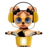 Aanbiddelijk puppy met hoofdtelefoons die op fiets zitten Stock Foto