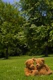 Aanbiddelijk teddybear paar in het park stock afbeeldingen