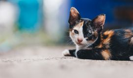 Aanbiddelijk weinig gestreepte katkatje die camera bekijken stock fotografie