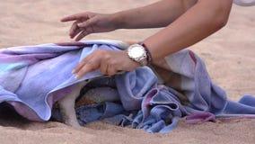 Aanbiddelijk weinig hond, hefboom russel stock videobeelden