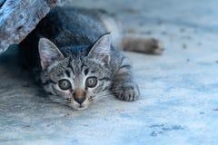 Aanbiddelijk weinig katje stock afbeelding