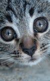 Aanbiddelijk weinig katje royalty-vrije stock afbeeldingen
