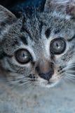 Aanbiddelijk weinig katje stock foto's