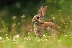 Aanbiddelijk wild konijn op weide Stock Afbeelding