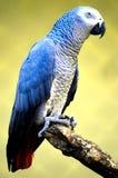 Aanbiddelijke blauwe vogel royalty-vrije stock foto