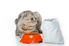 aanbiddelijke bontkat die dichtbij kom en pak van kattenvoedsel liggen op wit stock foto