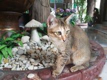 Aanbiddelijke Bruine kat Royalty-vrije Stock Foto