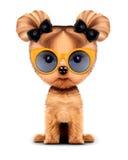 Aanbiddelijke die van een hond met zonnebril, op wit wordt geïsoleerd Royalty-vrije Stock Foto's
