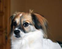 Aanbiddelijke en droevige hond Stock Afbeelding