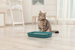 Aanbiddelijke grijze kat dichtbij kattebak binnen royalty-vrije stock fotografie