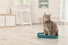 Aanbiddelijke grijze kat in kattebak binnen stock foto
