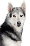 Aanbiddelijke hond Royalty-vrije Stock Afbeeldingen