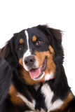 Aanbiddelijke hond Royalty-vrije Stock Foto's