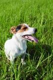 Aanbiddelijke hond die zwaar op gras ademen stock afbeeldingen