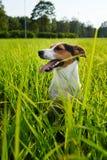 Aanbiddelijke hond die zwaar op gras ademen stock fotografie