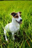 Aanbiddelijke hond die zwaar op gras ademen royalty-vrije stock foto's