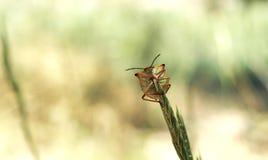 Aanbiddelijke insectmacro stock foto