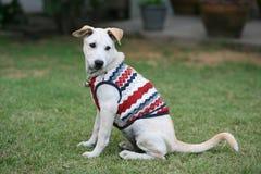 Aanbiddelijke jonge hond die doek op het gras draagt Stock Foto