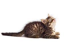 Aanbiddelijke kat royalty-vrije stock foto