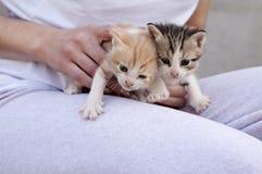 Aanbiddelijke katjes Royalty-vrije Stock Fotografie