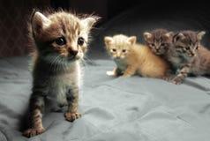Aanbiddelijke kleine katjes royalty-vrije stock foto