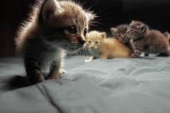 Aanbiddelijke kleine katjes royalty-vrije stock afbeeldingen