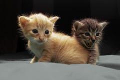Aanbiddelijke kleine katjes stock foto