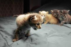 Aanbiddelijke kleine katjes royalty-vrije stock foto's