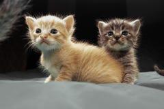 Aanbiddelijke kleine katjes royalty-vrije stock afbeelding