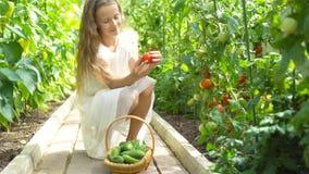 Aanbiddelijke meisje het oogsten komkommers en tomaten in serre stock videobeelden