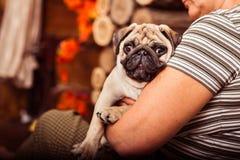 Aanbiddelijke puppypug op zijn owner& x27; s wapens Royalty-vrije Stock Foto's